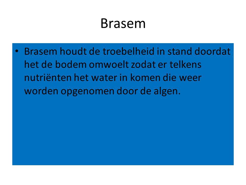 Brasem