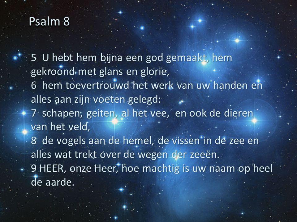 Psalm 8 5 U hebt hem bijna een god gemaakt, hem gekroond met glans en glorie,