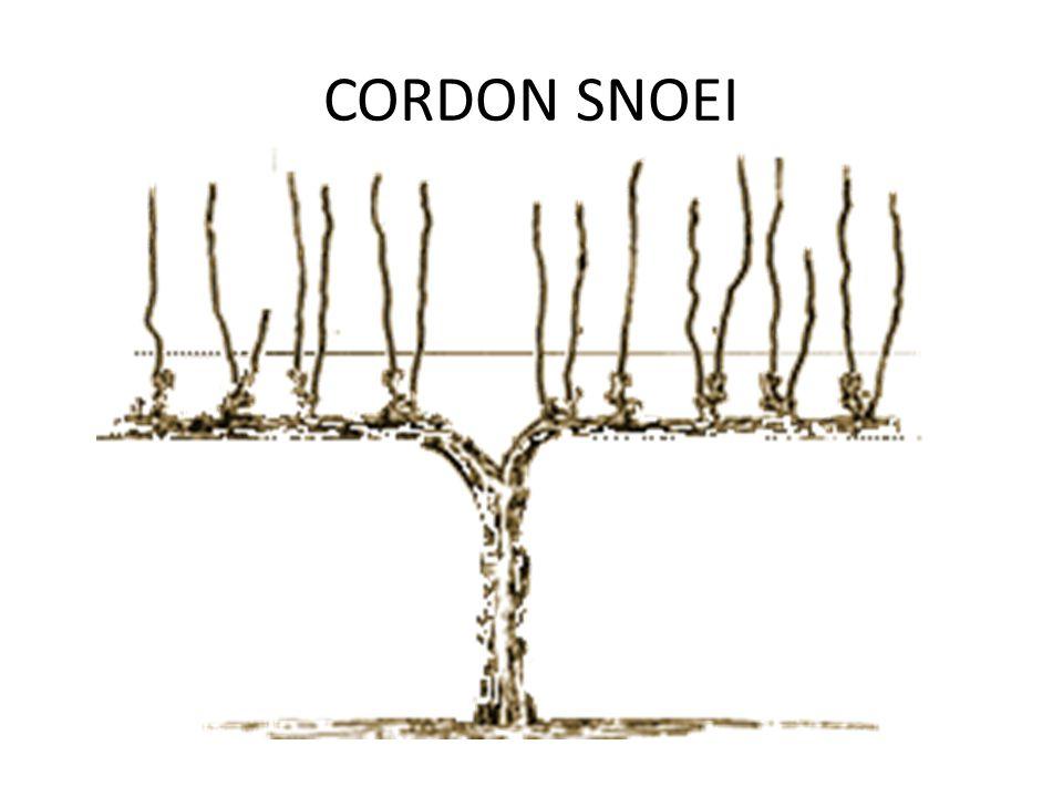 CORDON SNOEI