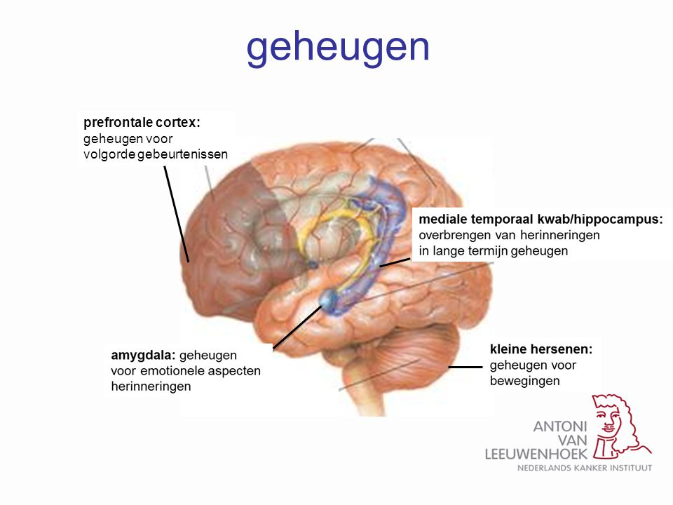 geheugen prefrontale cortex: geheugen voor volgorde gebeurtenissen
