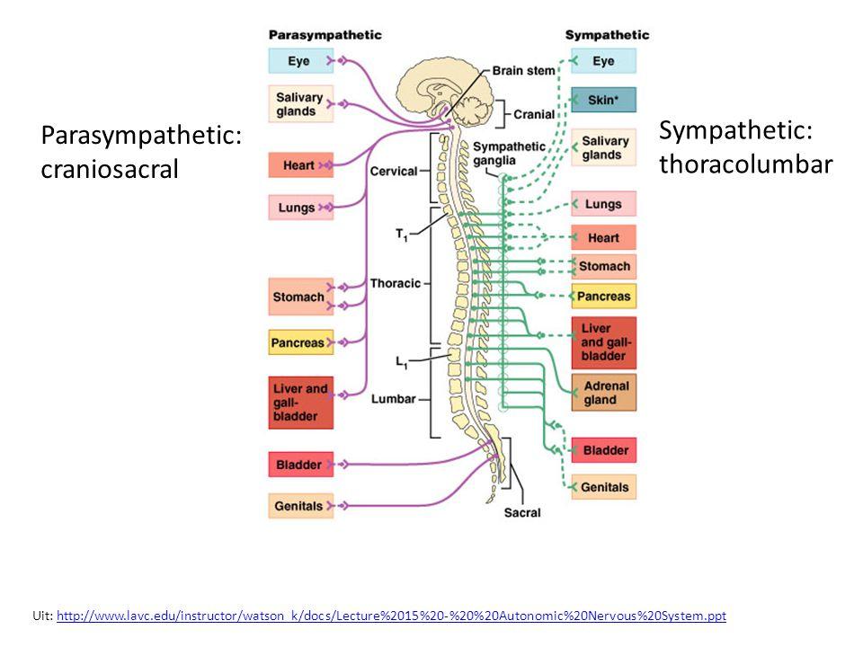 Sympathetic: Parasympathetic: thoracolumbar craniosacral