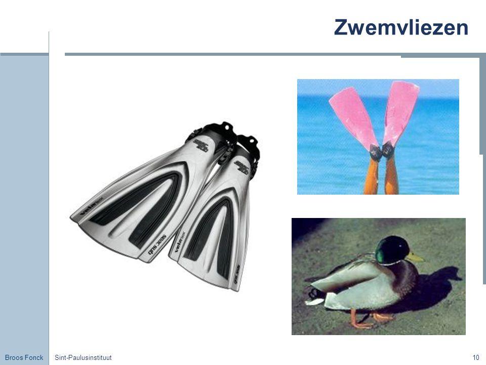Zwemvliezen Title Sint-Paulusinstituut