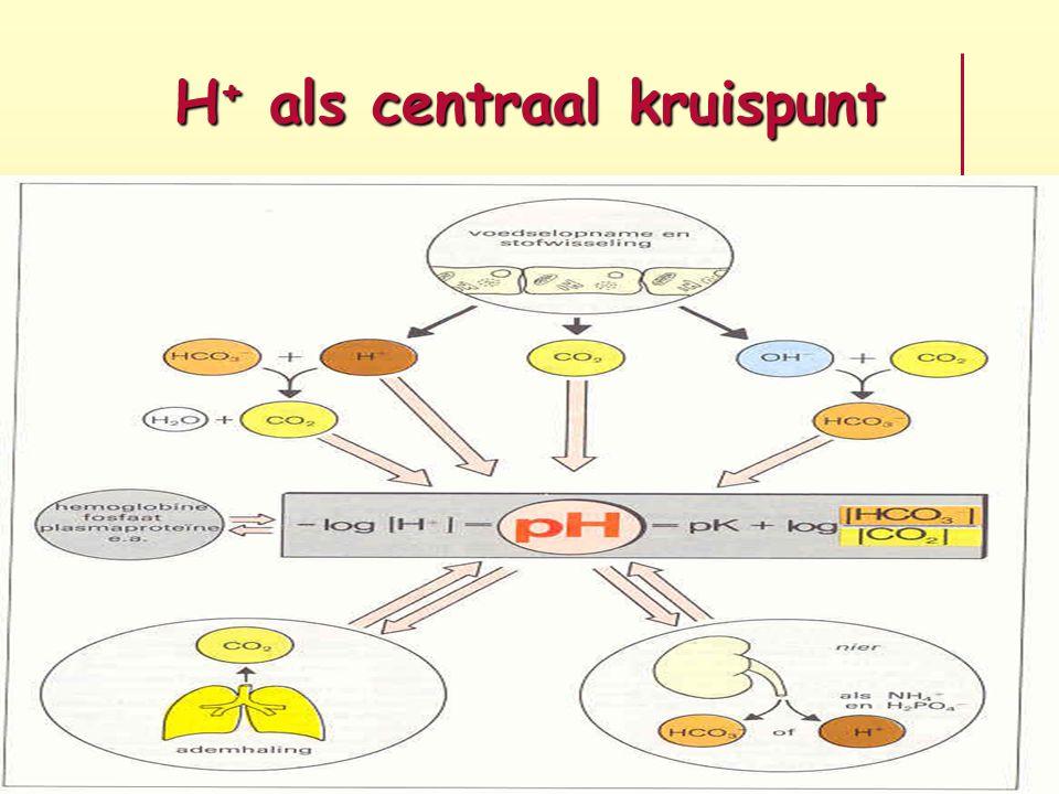 H+ als centraal kruispunt