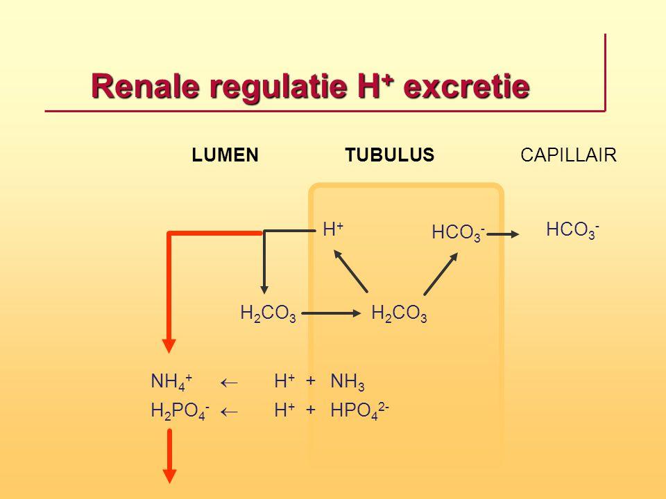 Renale regulatie H+ excretie