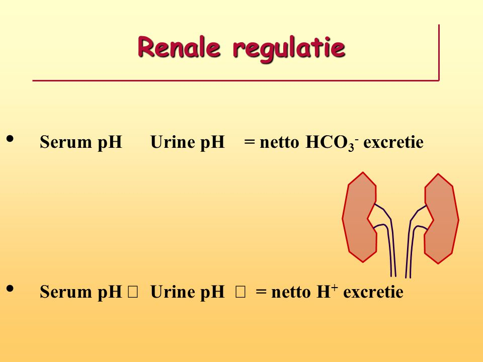 Renale regulatie Serum pH ­ Urine pH ­ = netto HCO3- excretie