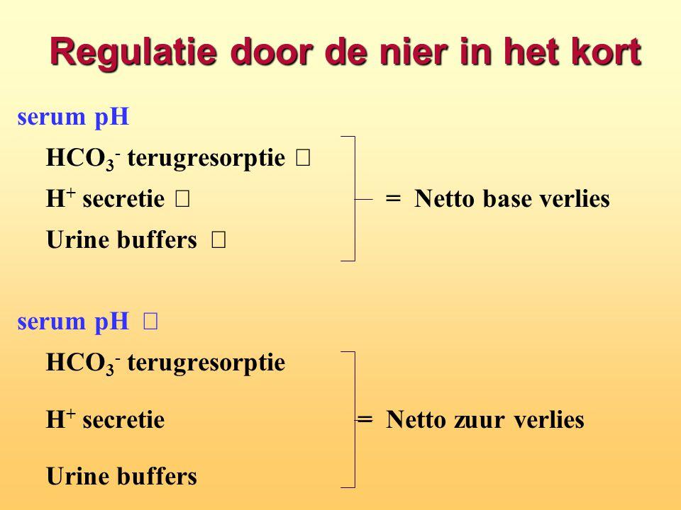 Regulatie door de nier in het kort