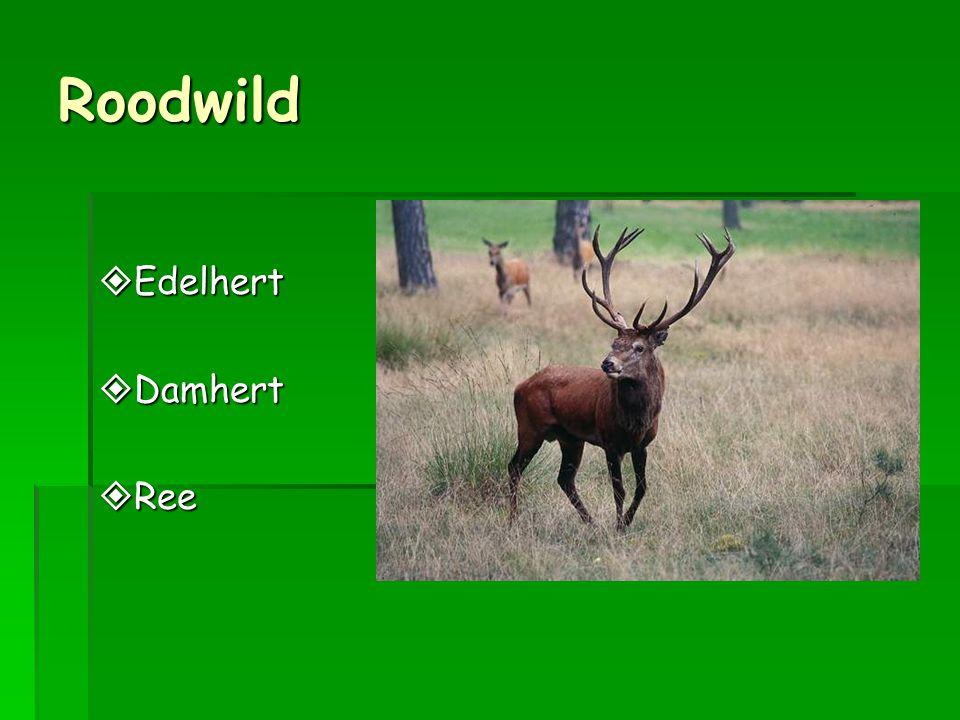 Roodwild Edelhert Damhert Ree