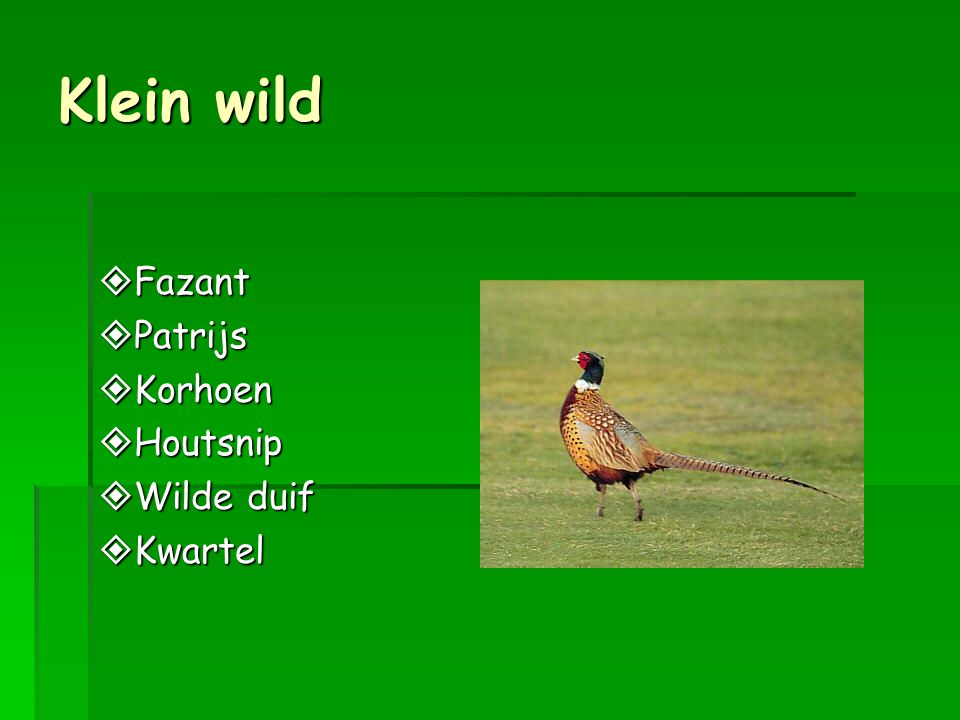 Klein wild Fazant Patrijs Korhoen Houtsnip Wilde duif Kwartel