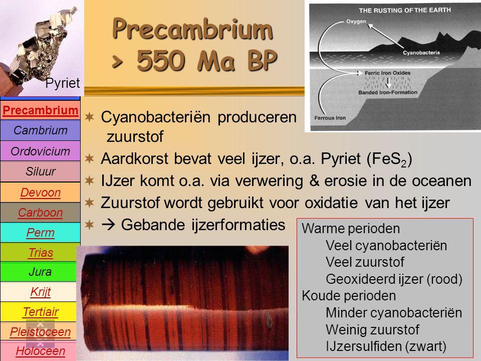Precambrium > 550 Ma BP Cyanobacteriën produceren zuurstof