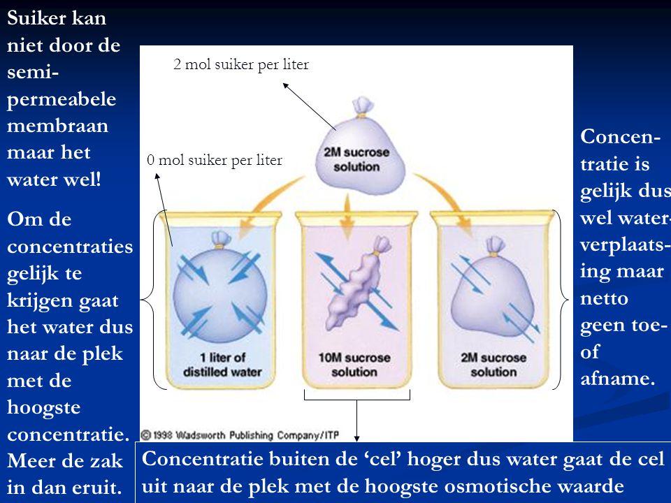 Suiker kan niet door de semi-permeabele membraan maar het water wel!