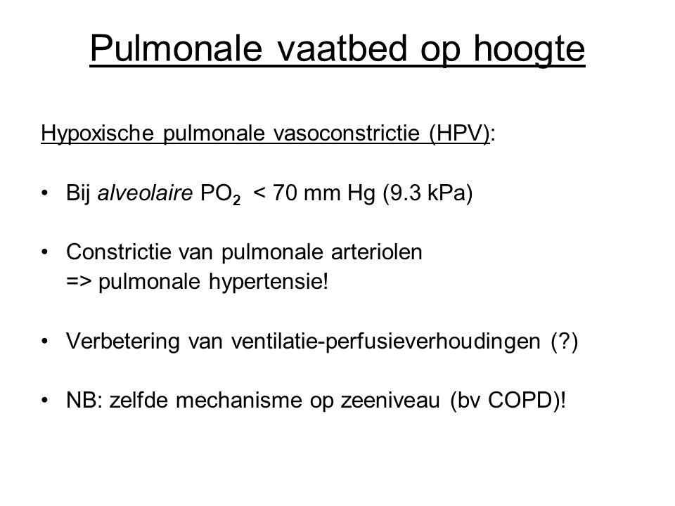 Pulmonale vaatbed op hoogte