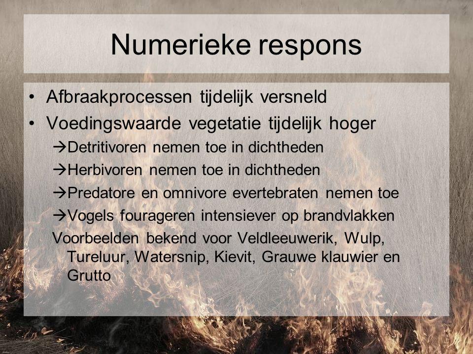 Numerieke respons Afbraakprocessen tijdelijk versneld