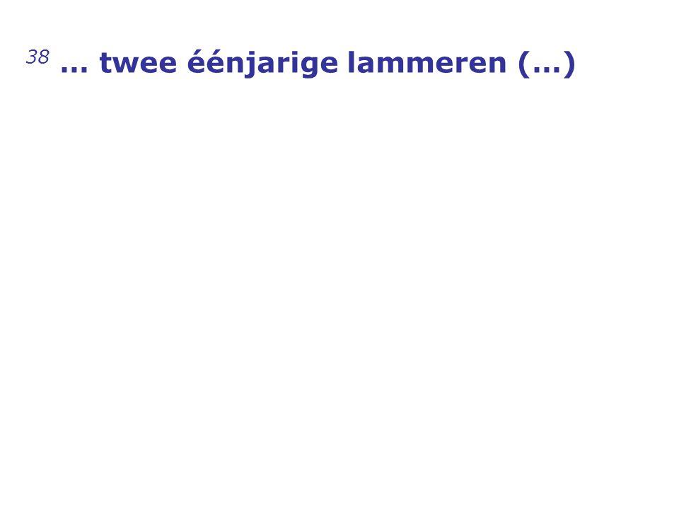 38 … twee éénjarige lammeren (…)