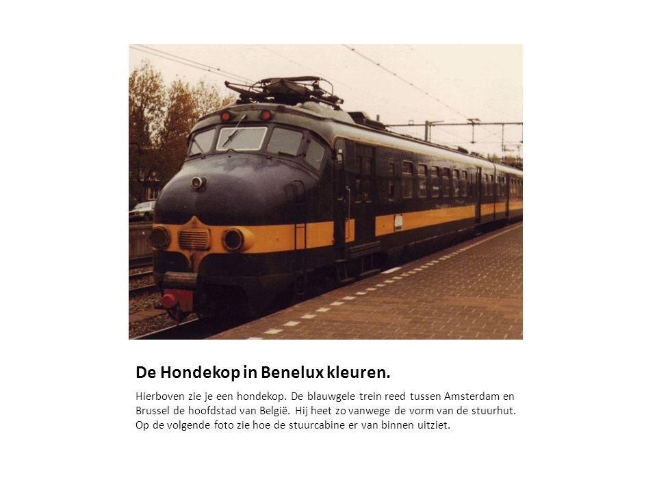 De Hondekop in Benelux kleuren.