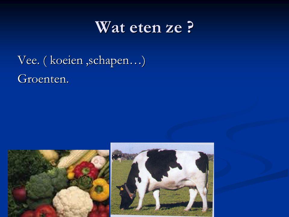 Wat eten ze Vee. ( koeien ,schapen…) Groenten.