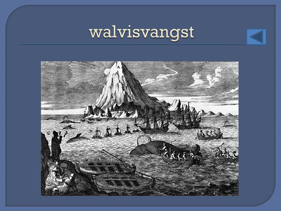walvisvangst