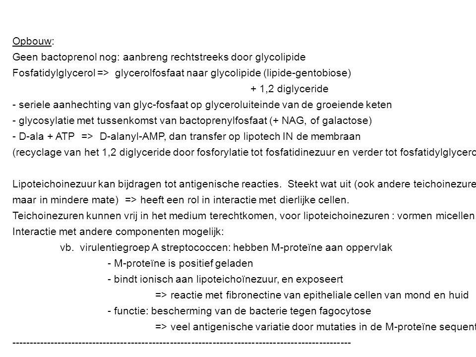 Opbouw: Geen bactoprenol nog: aanbreng rechtstreeks door glycolipide. Fosfatidylglycerol => glycerolfosfaat naar glycolipide (lipide-gentobiose)