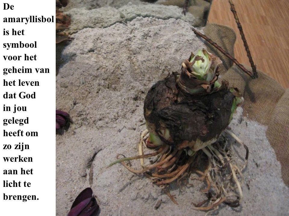 De amaryllisbol. is het. symbool. voor het. geheim van. het leven. dat God. in jou. gelegd.