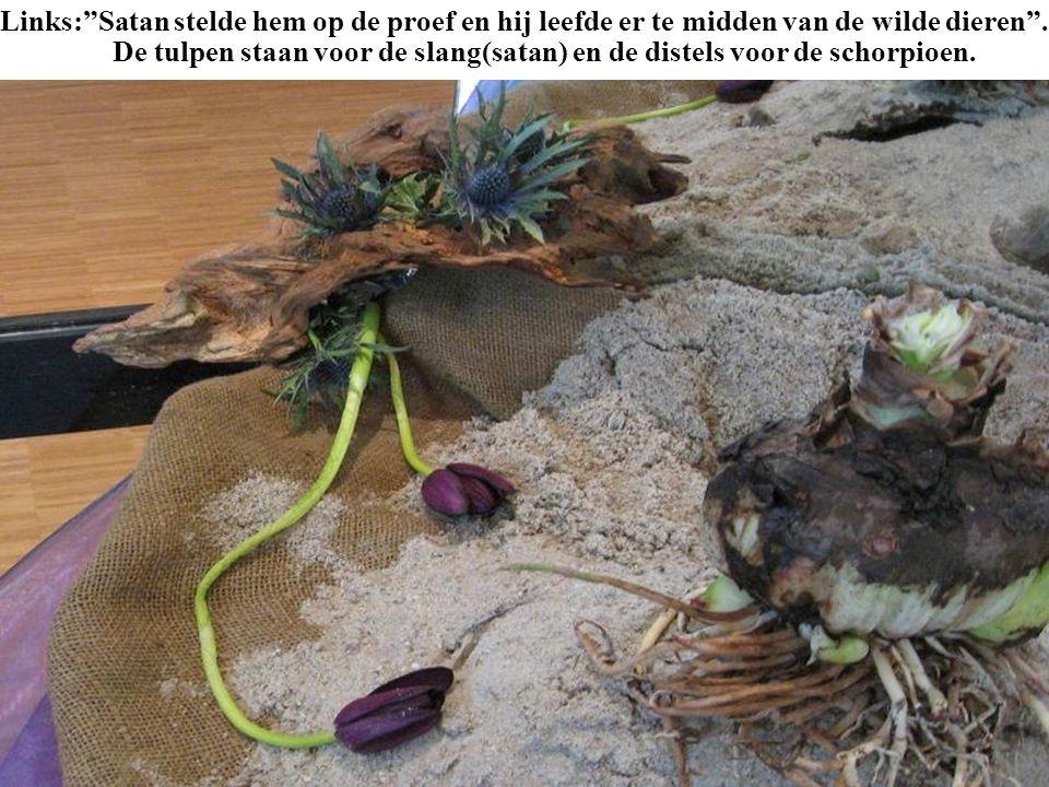 Links: Satan stelde hem op de proef en hij leefde er te midden van de wilde dieren . De tulpen staan voor de slang(satan) en de distels voor de schorpioen.