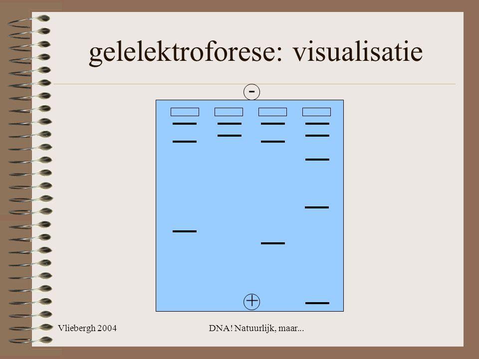 gelelektroforese: visualisatie