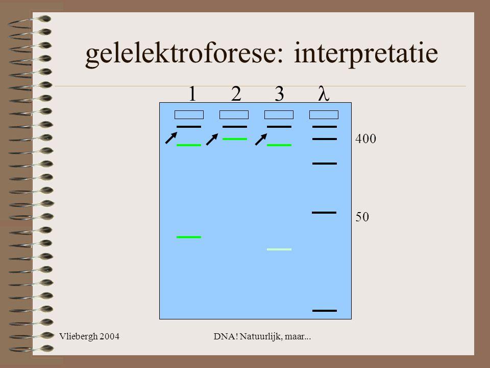 gelelektroforese: interpretatie
