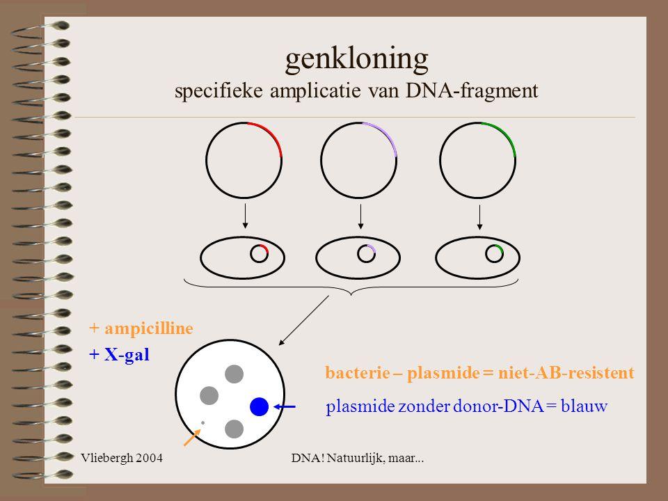 genkloning specifieke amplicatie van DNA-fragment