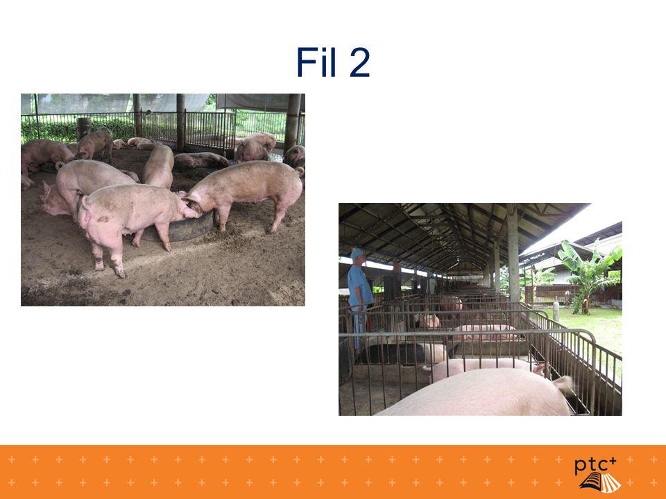 Fil 2