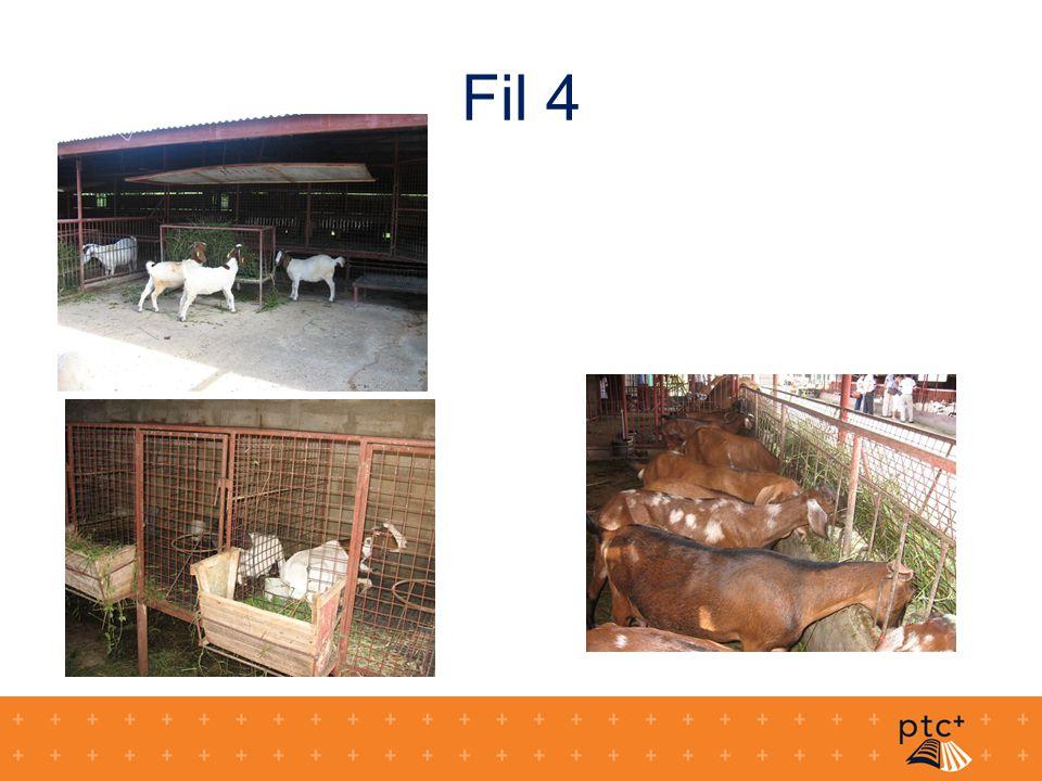 Fil 4