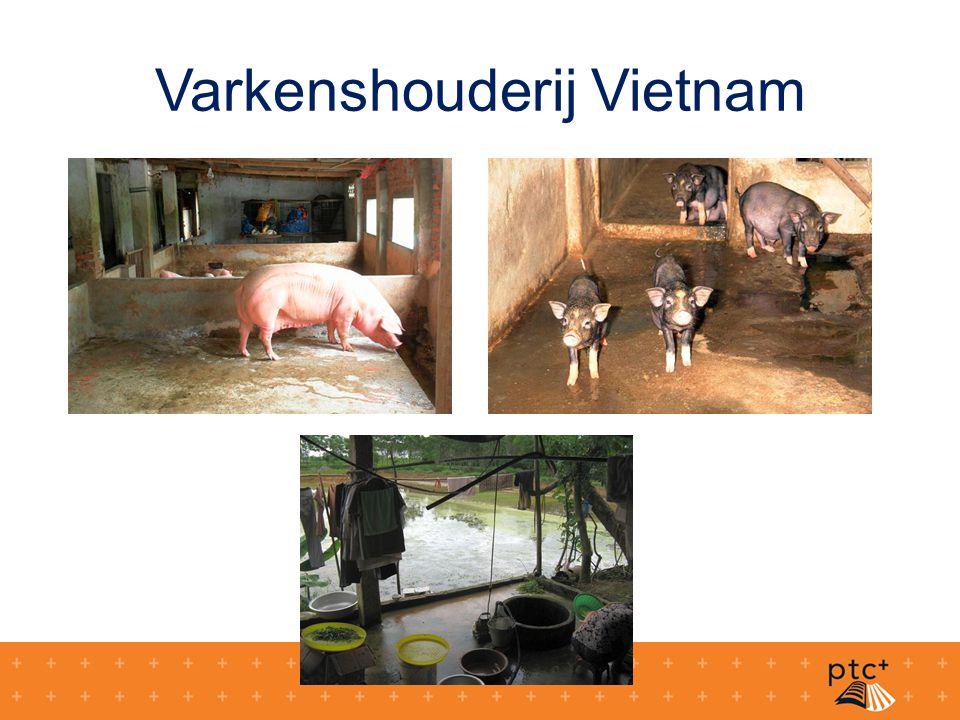 Varkenshouderij Vietnam