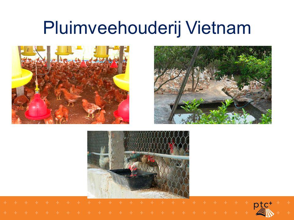 Pluimveehouderij Vietnam