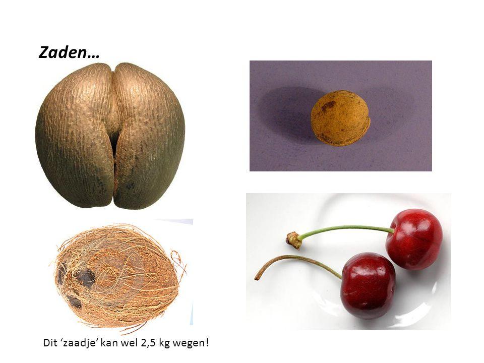 Zaden… Sommige zijn groot En zwaar Andere zijn veel kleiner