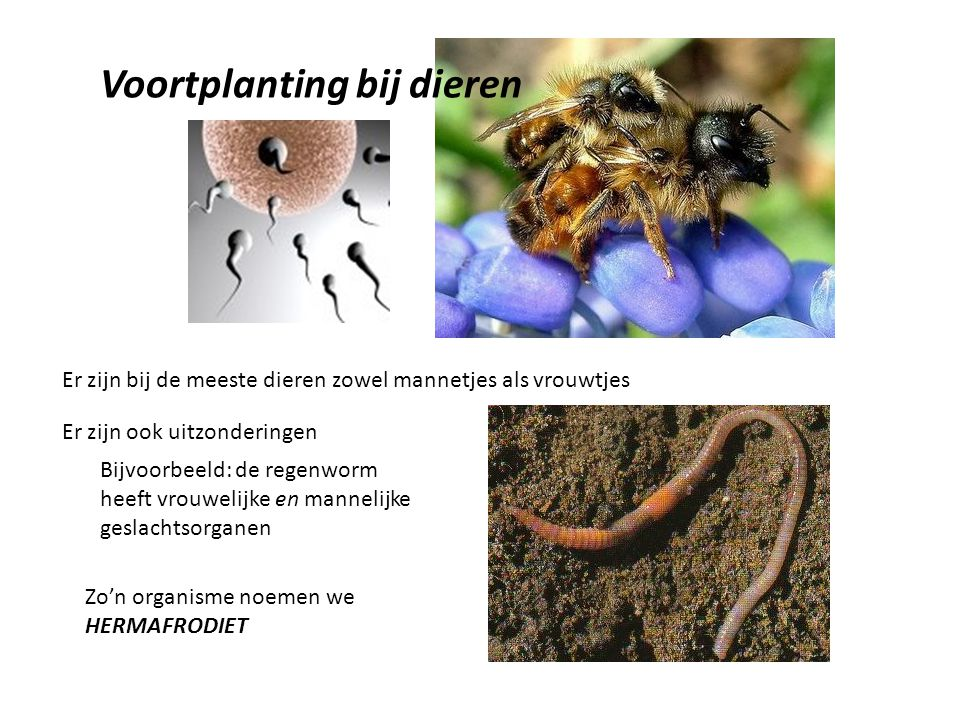 Voortplanting bij dieren