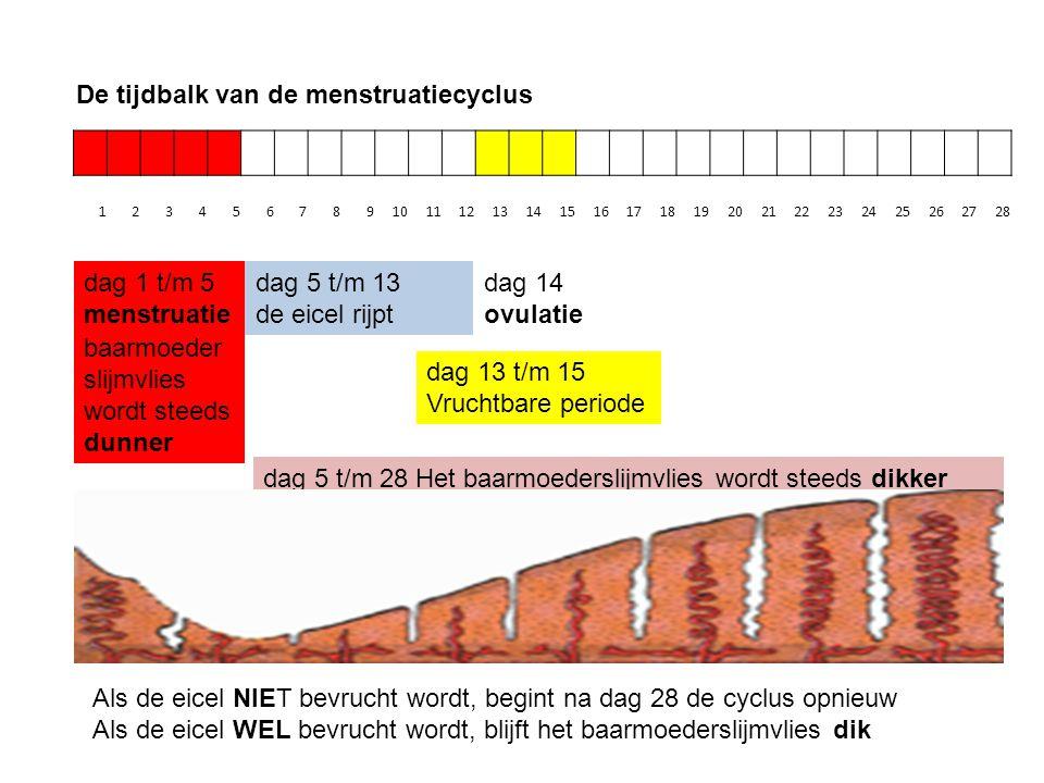 De tijdbalk van de menstruatiecyclus