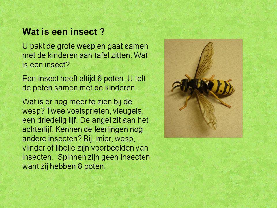 Wat is een insect U pakt de grote wesp en gaat samen met de kinderen aan tafel zitten. Wat is een insect