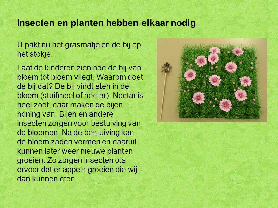 Insecten en planten hebben elkaar nodig
