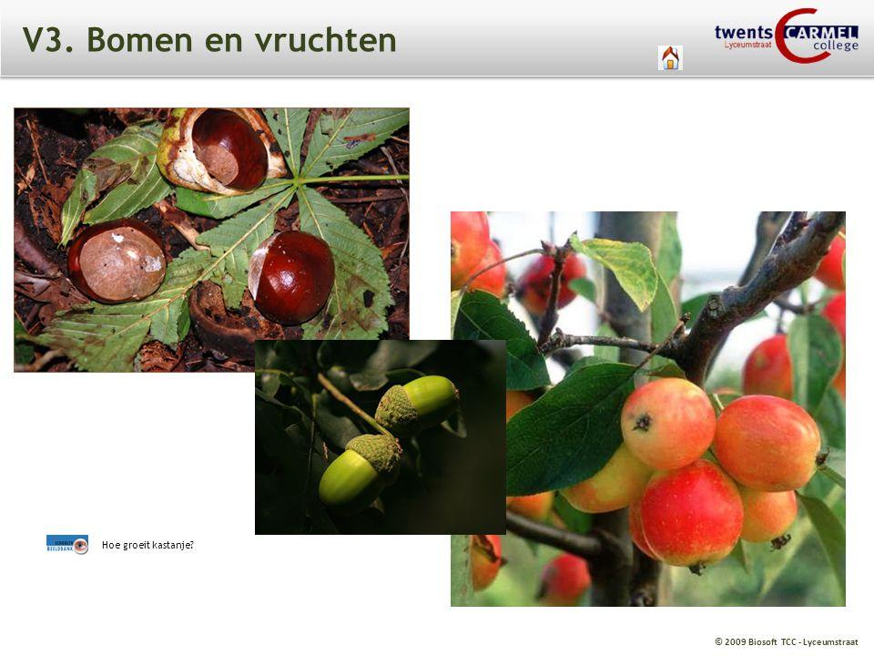 V3. Bomen en vruchten Hoe groeit kastanje