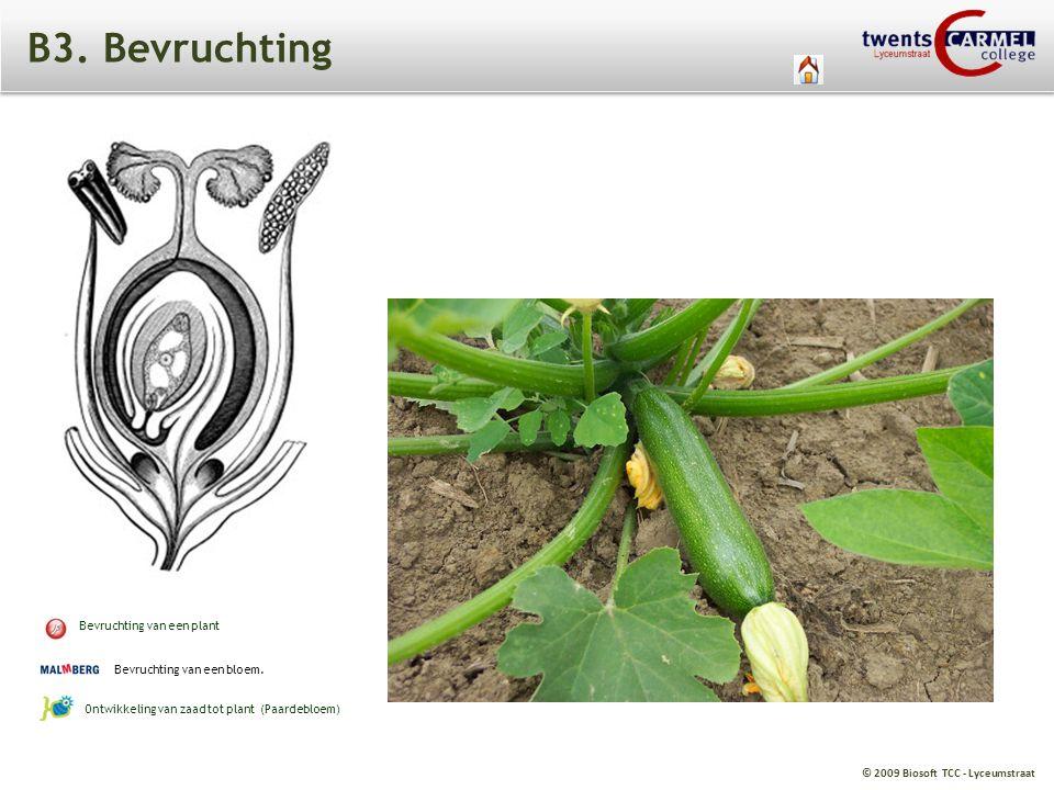 B3. Bevruchting Bevruchting van een plant Bevruchting van een bloem.
