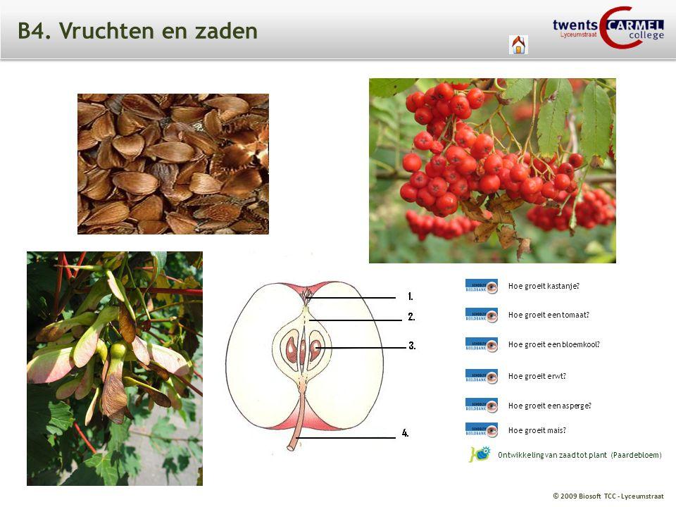 B4. Vruchten en zaden Hoe groeit kastanje Hoe groeit een tomaat