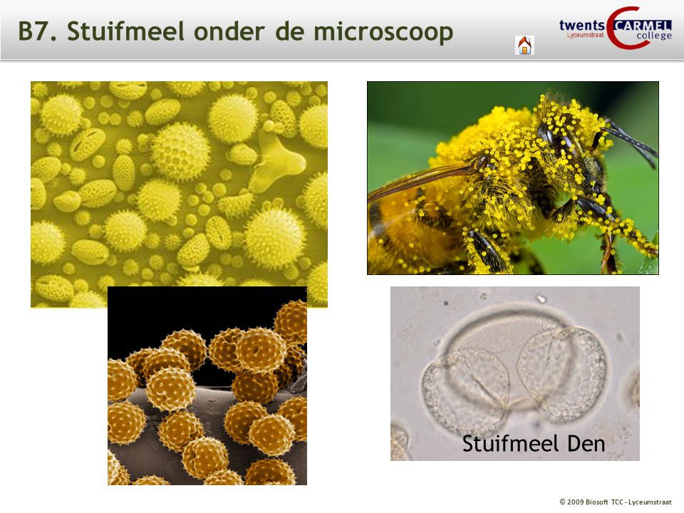 B7. Stuifmeel onder de microscoop
