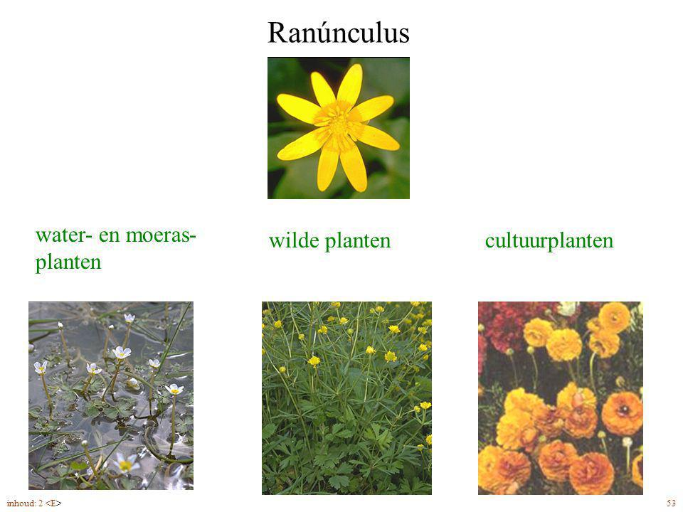Ranúnculus water- en moeras- planten wilde planten cultuurplanten