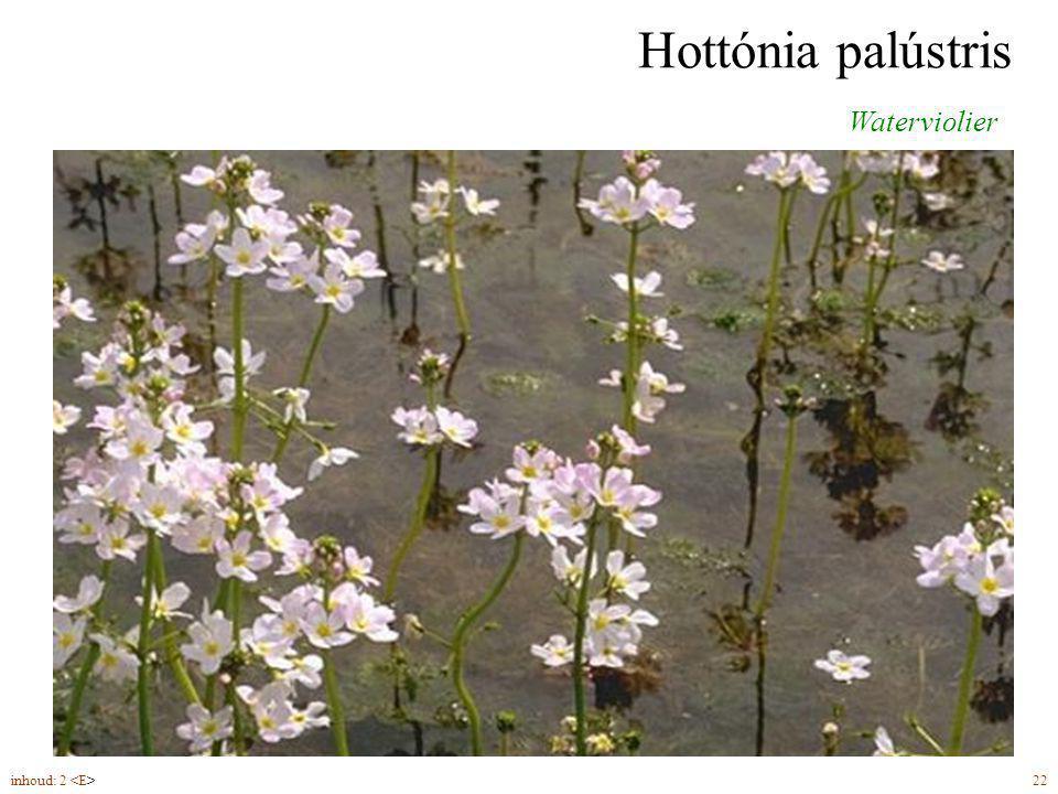 Hottónia palústris Waterviolier bloemen (5-6) in een ijle