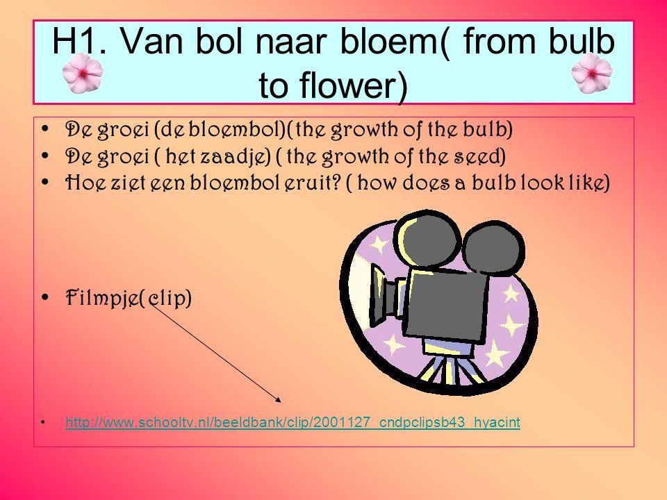 H1. Van bol naar bloem( from bulb to flower)