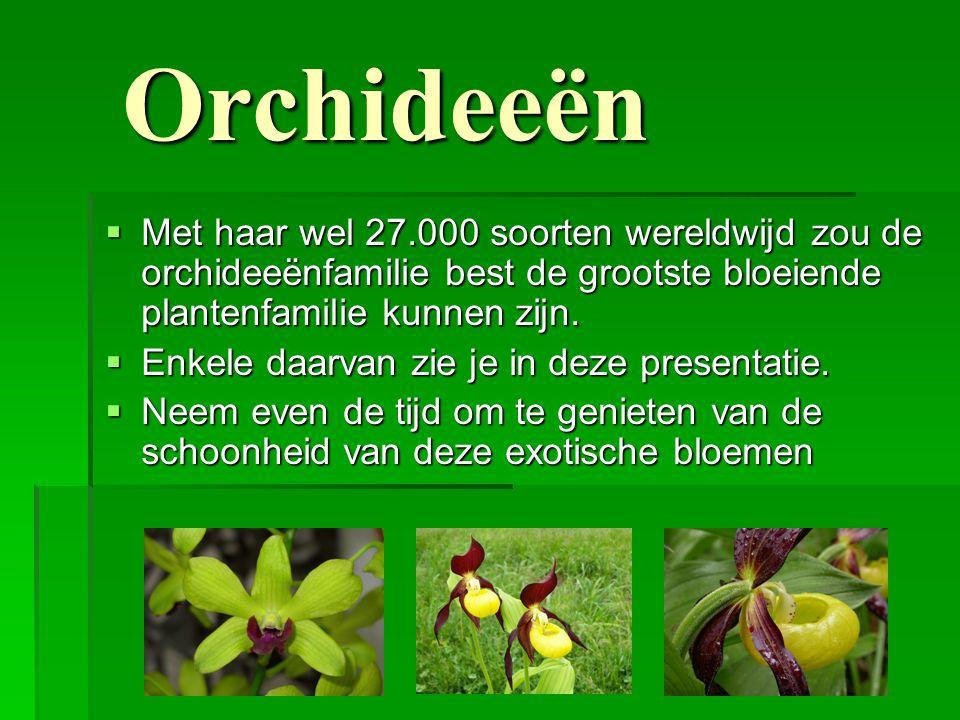 Orchideeën Met haar wel 27.000 soorten wereldwijd zou de orchideeënfamilie best de grootste bloeiende plantenfamilie kunnen zijn.