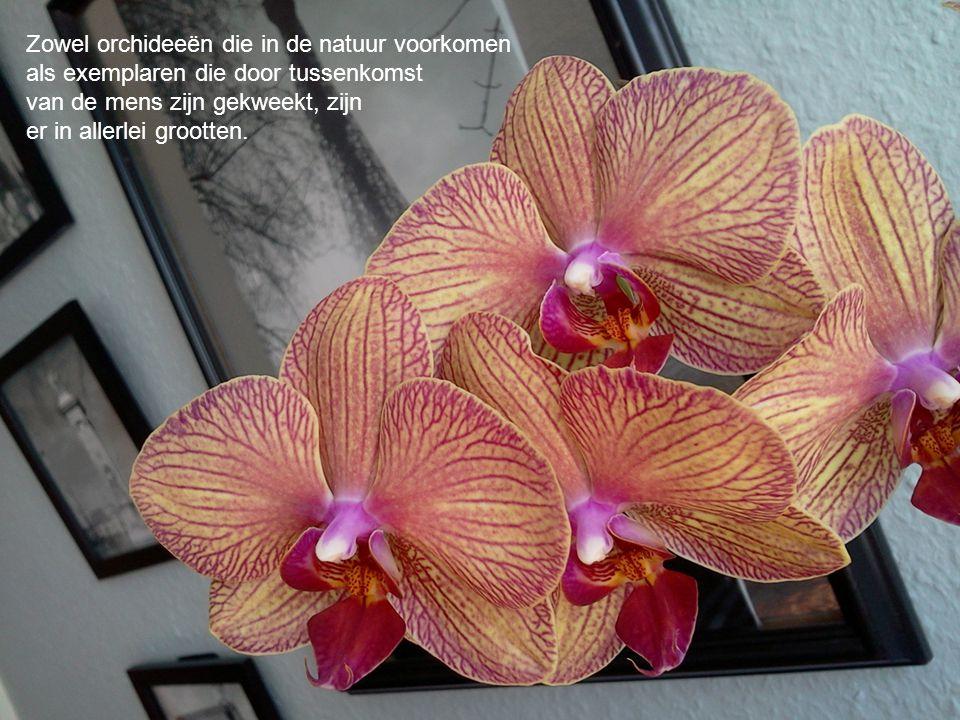 Zowel orchideeën die in de natuur voorkomen