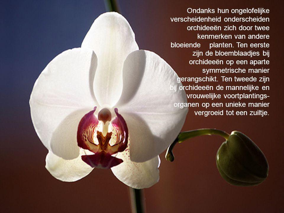 Ondanks hun ongelofelijke verscheidenheid onderscheiden orchideeën zich door twee kenmerken van andere bloeiende planten. Ten eerste zijn de bloemblaadjes bij orchideeën op een aparte symmetrische manier gerangschikt. Ten tweede zijn bij orchideeën de mannelijke en vrouwelijke voortplantings-organen op een unieke manier vergroeid tot een zuiltje.