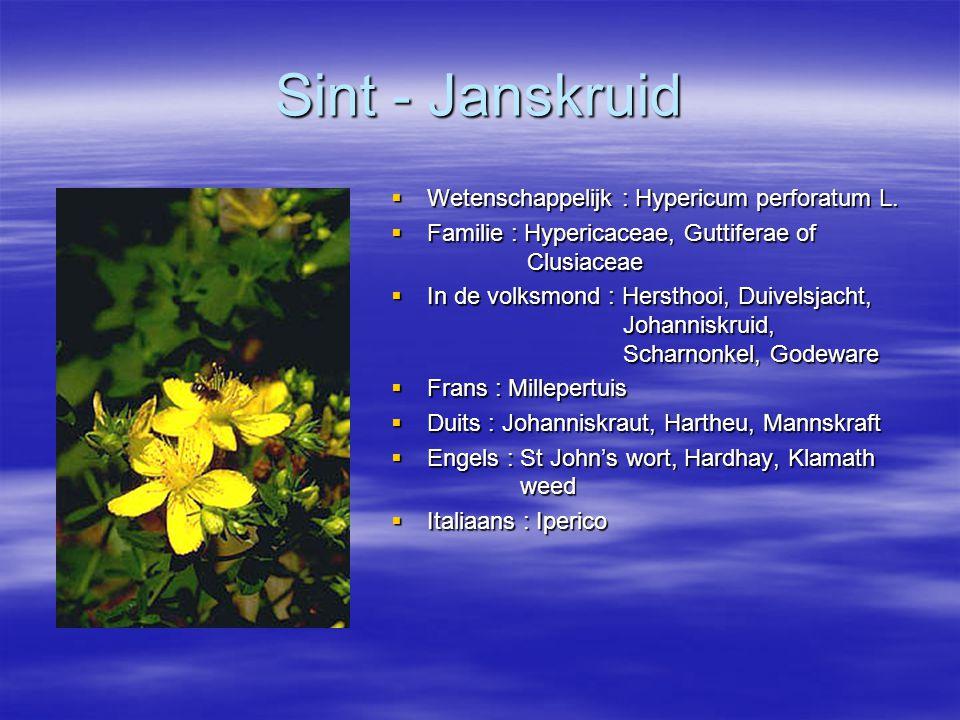 Sint - Janskruid Wetenschappelijk : Hypericum perforatum L.