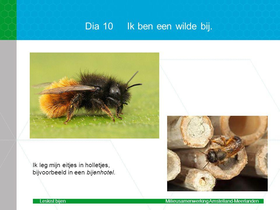 Dia 10 Ik ben een wilde bij. voorbeeld. Ik leg mijn eitjes in holletjes, bijvoorbeeld in een bijenhotel.