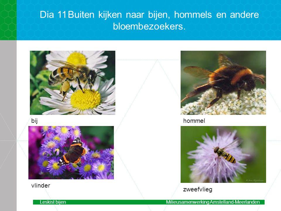 Dia 11 Buiten kijken naar bijen, hommels en andere bloembezoekers.