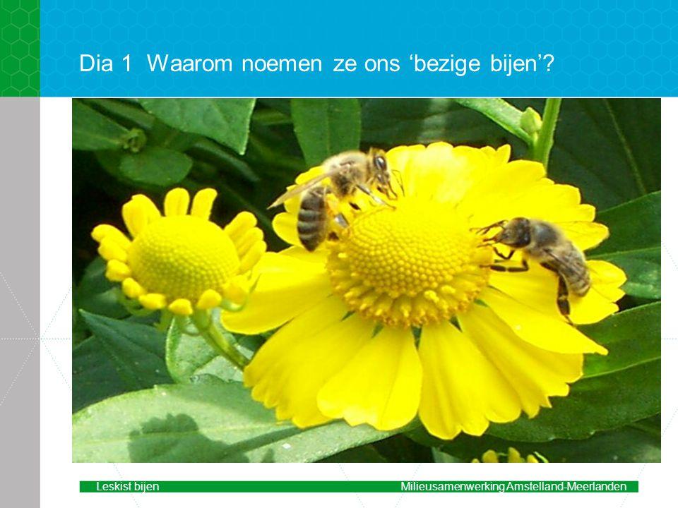 Dia 1 Waarom noemen ze ons 'bezige bijen'