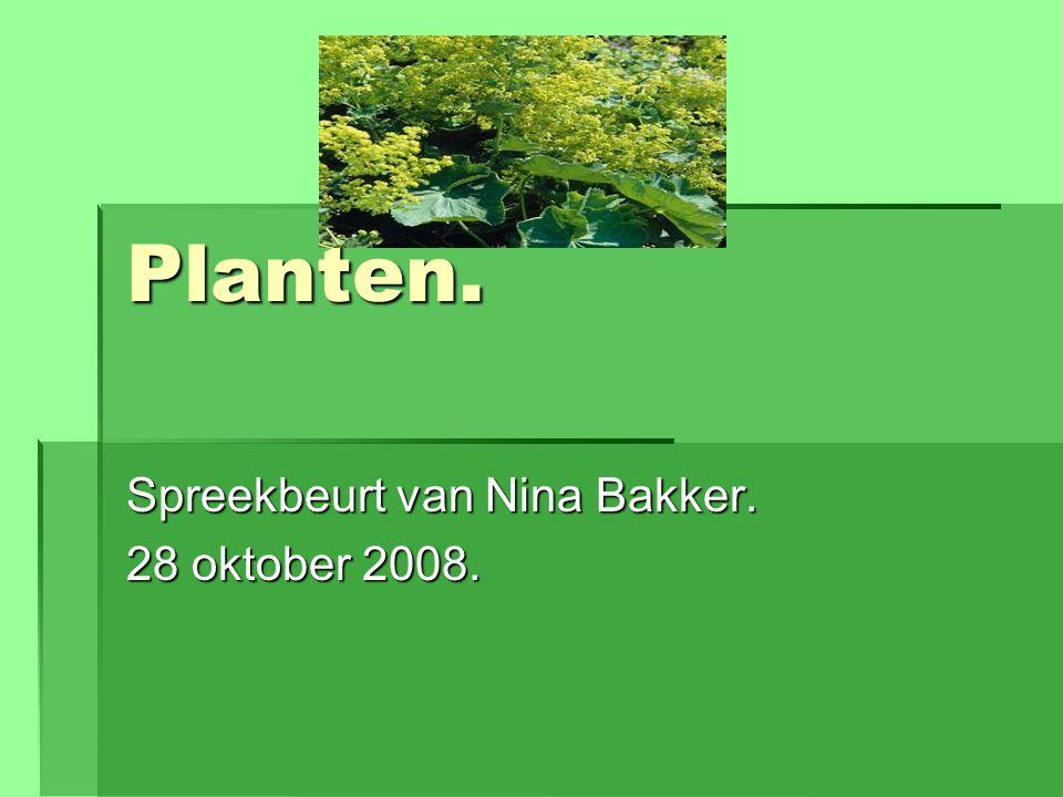 Spreekbeurt van Nina Bakker. 28 oktober 2008.